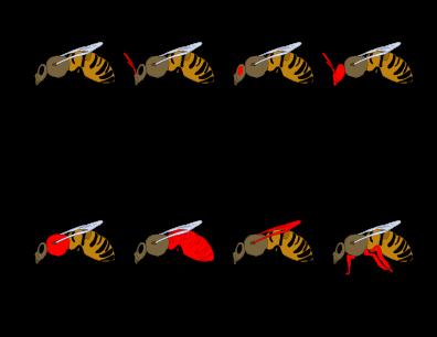 Bees Printout