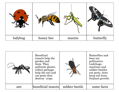 Beneficial Insects Printout