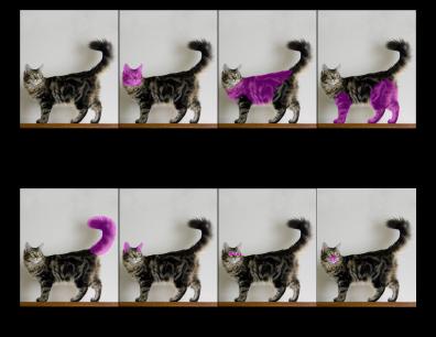 Cat Nomenclature Printout