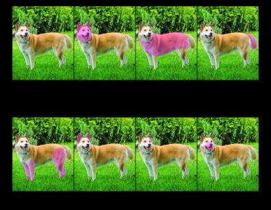 Dog Nomenclature Printout