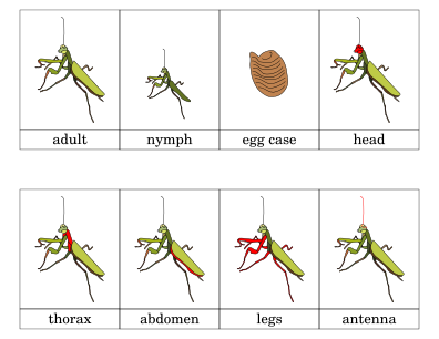 Praying Mantis on Math Worksheets Fun For Kids