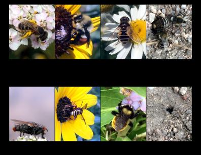 Pollinators Printout