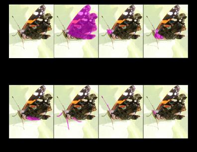 Butterflies Printout