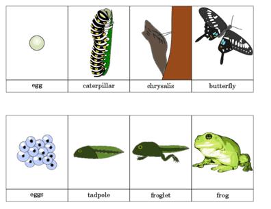 Biology Printouts on Life Cycle Plant Kindergarten Worksheet